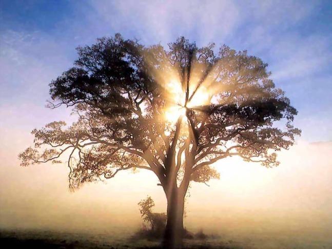 L'albero che ascende al Cielo
